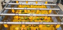 黄桃辊刷去毛喷淋清洗机