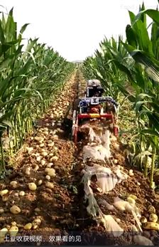 手扶带动土豆收获机