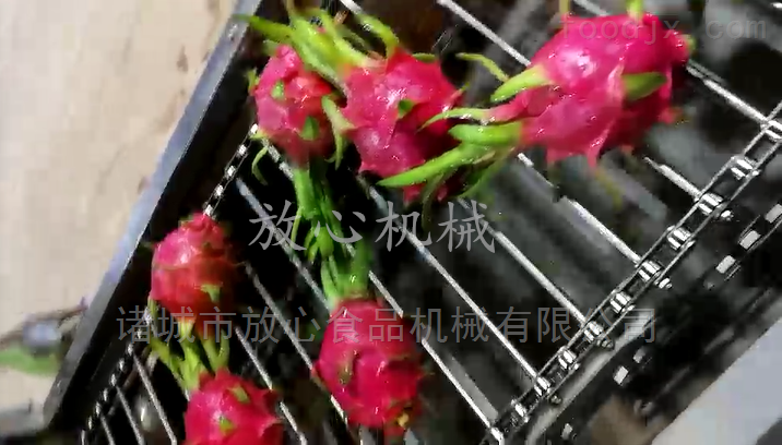 火龙果清洗机