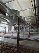 鲁兴农牧现代化肉鸡笼笼养设备
