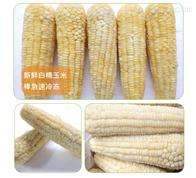 YT—800糯玉米速冻加工设备