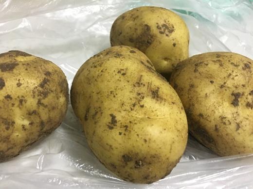 2018马铃薯:想说爱你不容易