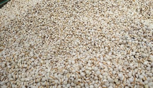 薏米产业发展有前景 去壳设备添助力
